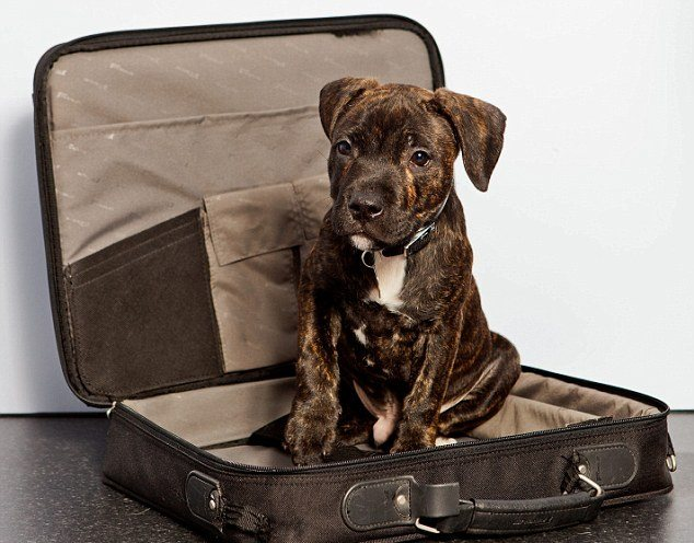 Fly to Greece with a pet? Tips & Info